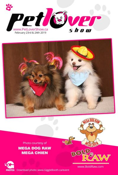 The Pet Lovers Show 2019